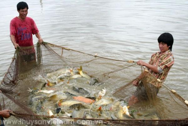 Hà Nội: Hiệu quả từ nuôi thủy sản tập trung quy mô lớn
