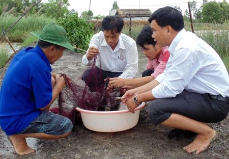 Cà Mau: Tổ hợp tác, nơi hỗ trợ kỹ thuật sản xuất cho nông dân