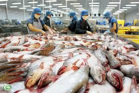 Người nuôi cá tra lỗ do giá thấp