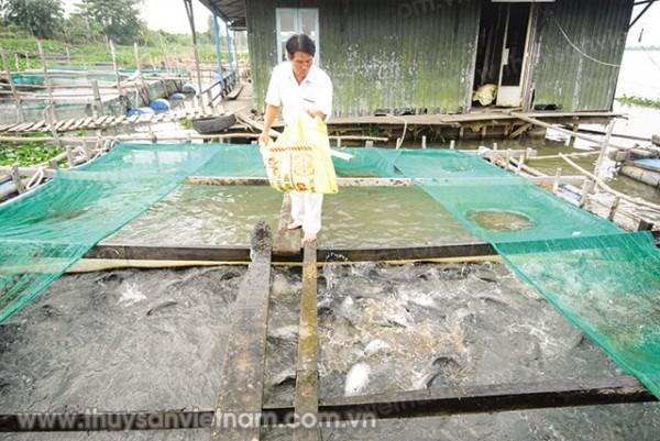 Hậu Giang: Người nuôi mất ăn mất ngủ vì cá thát lát