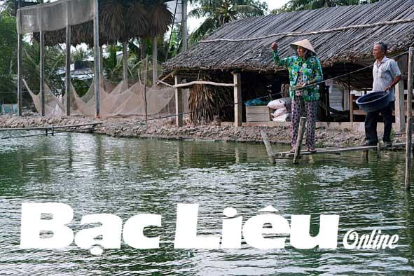 Ông Nguyễn Văn Oanh: Kinh tế gia đình phát triển nhờ nuôi cá trê vàng