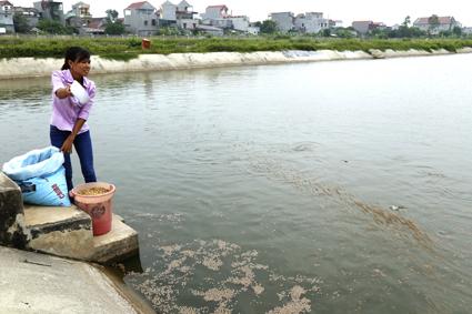 Trung tâm Giống thủy sản tỉnh Ninh Bình: Sản xuất và cung ứng giống các loài thủy sản nước ngọt chất lượng