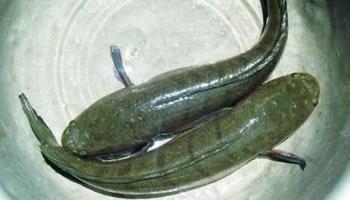 7 biện pháp phòng bệnh cho cá