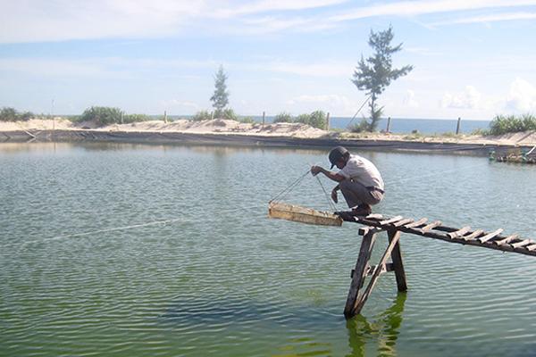 Quảng Bình: Phục hồi nuôi trồng thủy sản sau sự cố môi trường biển