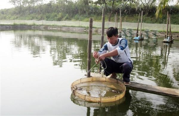 Thu 200 - 250 triệu đồng/ha từ mô hình nuôi cua biển Quảng Yên