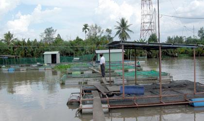 Tiền Giang: Cơ sở nuôi thủy sản đầu tiên đạt tiêu chuẩn VietGAP
