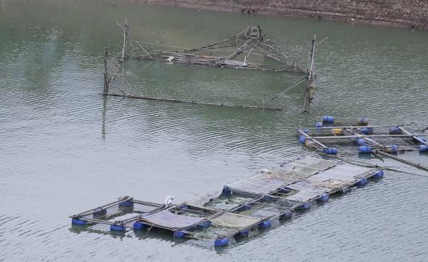 Lào Cai: Thử nghiệm nuôi cá lồng trên hồ thủy điện Cốc Ly