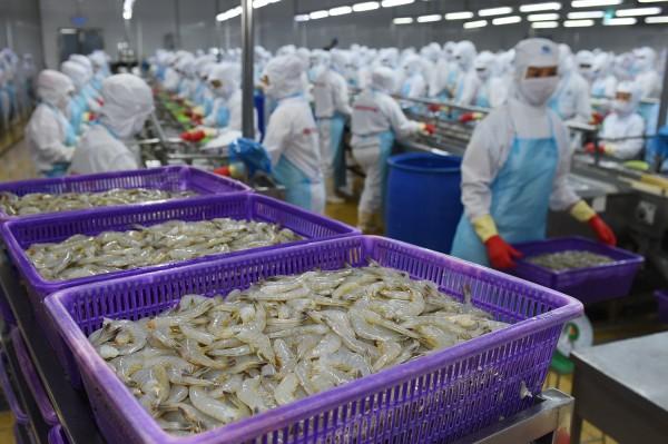 Con tôm Việt: Thách thức và cơ hội