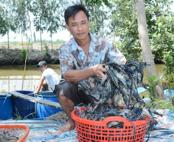 Nông dân Vĩnh Thuận… đã vui trở lại