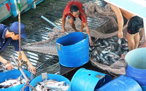 Xuất khẩu gặp khó, cá tra Việt Nam muốn đột phá ở thị trường nội địa