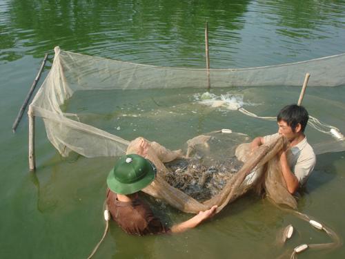 Nuôi trồng thủy sản tập trung: Thiếu vốn, bí đầu ra