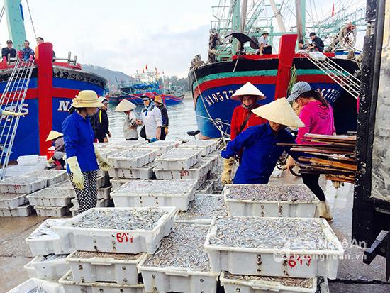 Chính ngư dân quyết định hiệu quả đánh bắt