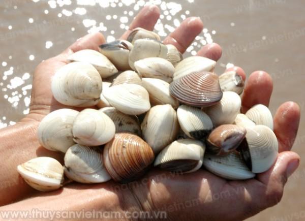 Biến đổi khí hậu: Thủy sản tìm cách thích ứng