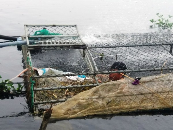 Người nuôi cá lồng, tôm chân trắng gặp khó sau bão