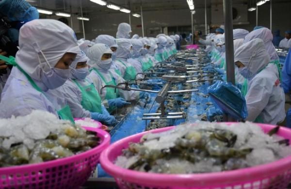 Tôm Việt Nam cạnh tranh với tôm Ấn Độ tại thị trường Nhật