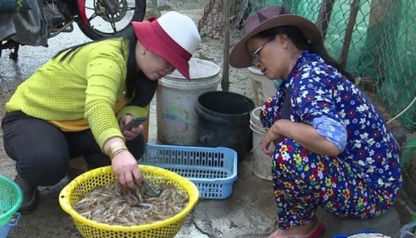 Phú Yên: Ngư dân trúng đậm tôm đất