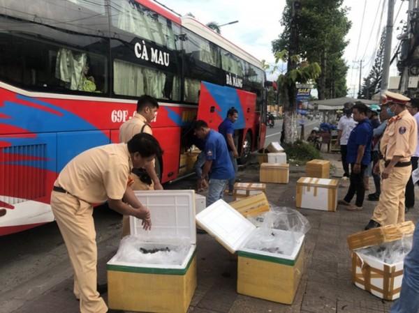 Bạc Liêu: Bắt quả tang 2 xe khách vận chuyển tôm bơm tạp chất