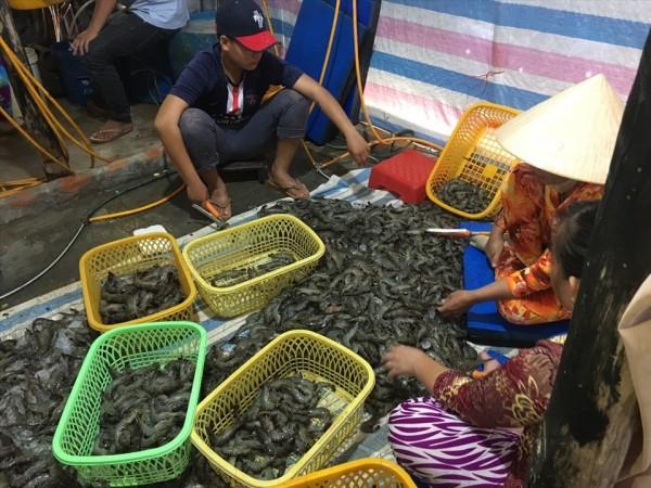 Phát hiện gần 80kg tôm tươi được bơm tạp chất ở Kiên Giang