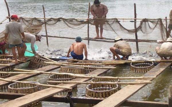 Thị trường thủy sản có dấu hiệu phục hồi, doanh nghiệp xuất khẩu tính toán thận trọng trong kinh doanh