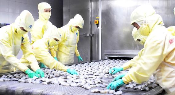 ĐBSCL: Xuất khẩu tôm vào thị trường châu Âu tăng mạnh ĐBSCL: Xuất khẩu tôm vào thị trường châu Âu tăng mạnh